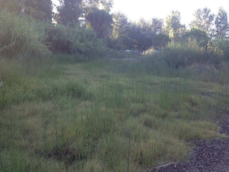 GRAU D'AGDE - rare deux terrains constructibles de 1070 et 1044m² hors lotissement - viabilisation en bordure