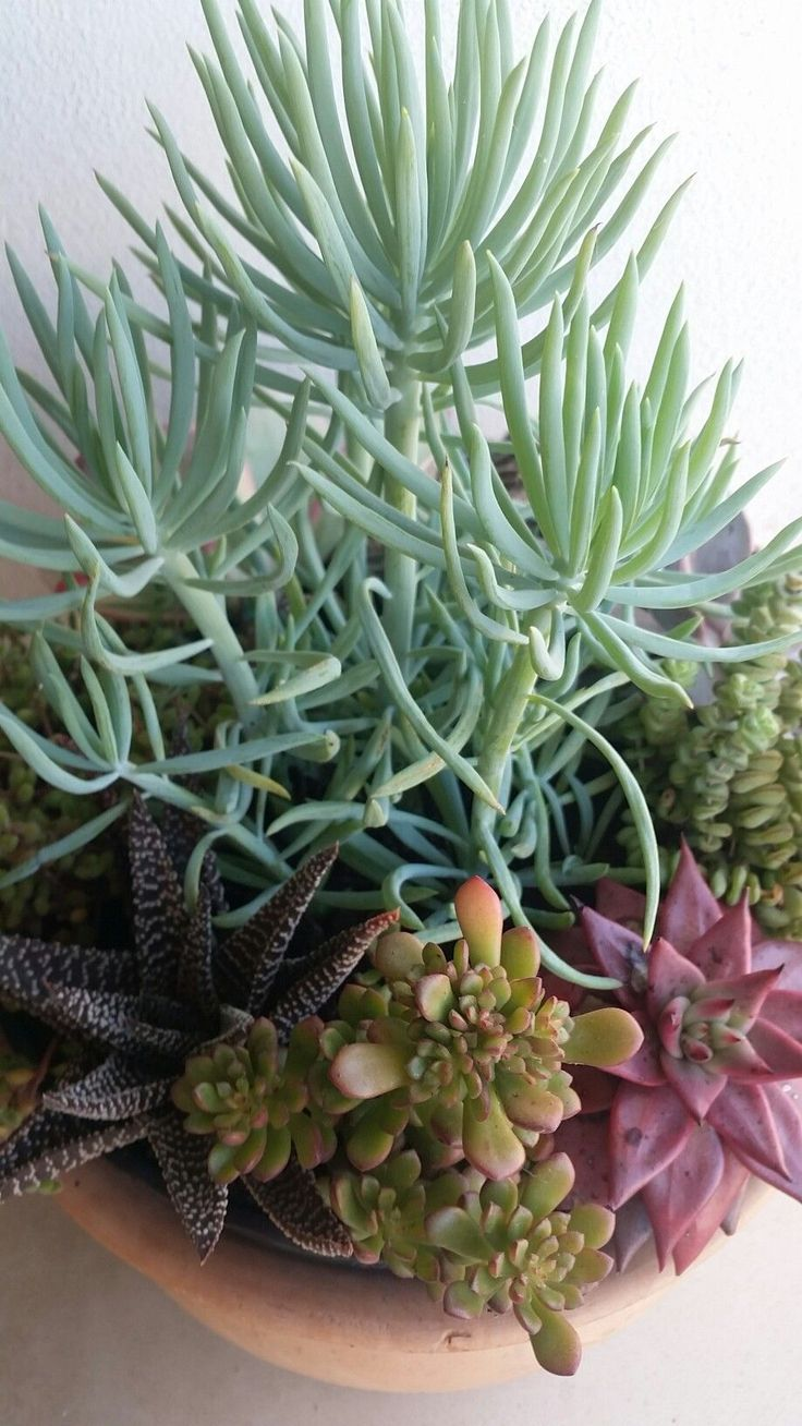 how to care for cactus and succulents