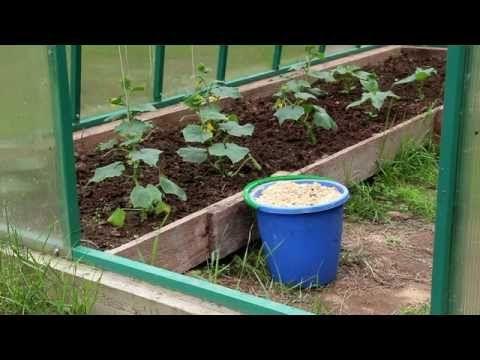 Использование опилок в огороде - YouTube