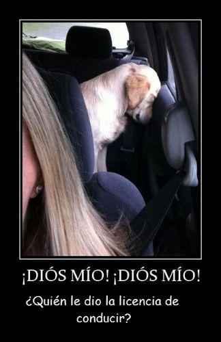 imagenes chistosas -  Diós! quién le dio la licencia de conducir