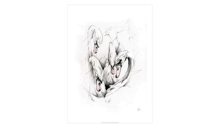 MONOQI   Swans Print