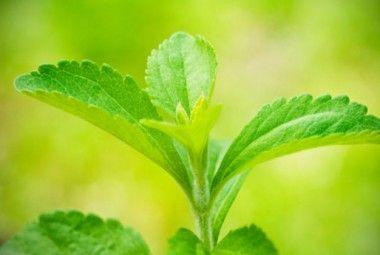 Stevia: coltivazione in vaso del dolcificante naturale! | Giardinieri in affitto