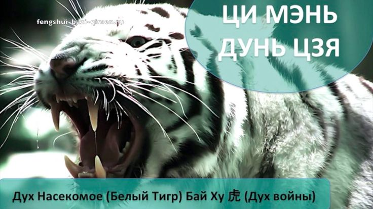 #81 Дух Насекомое (Белый Тигр), Бай Ху, 虎 – Дух войны l Ци Мэнь Дунь ...