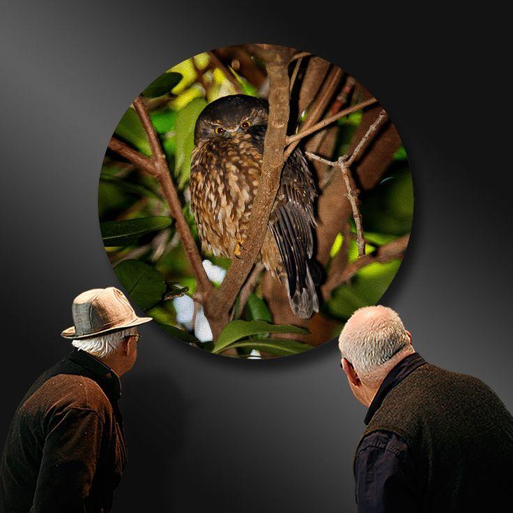 MOREPORK - Ruru, the quiet observer hearing wisdom - Ian Anderson Fine Art. http://ianandersonfineart.com/portfolio-1/