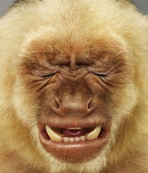 Best Funny Monkey Pictures Of All Time – oops Moments