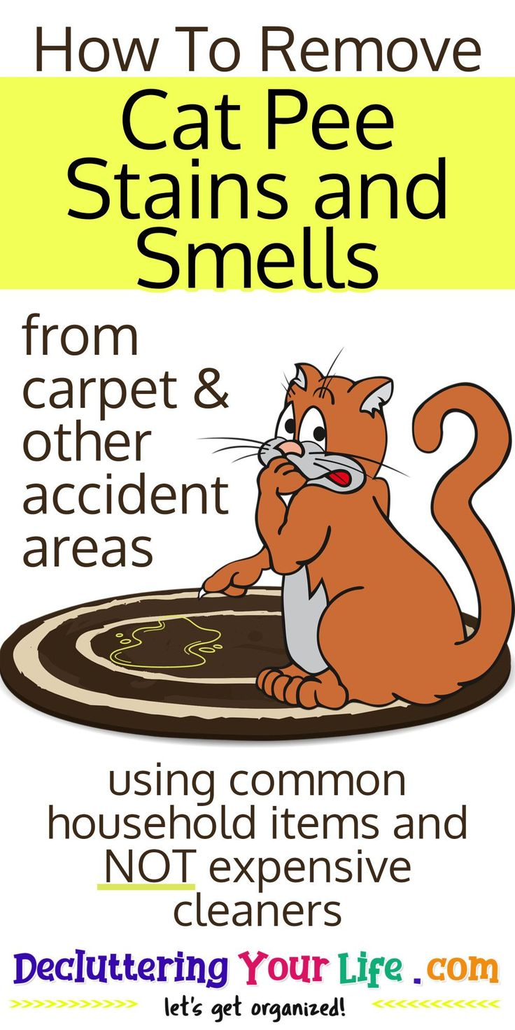 Carpet Cleaning Hacks How To Remove Cat Pee Stains and
