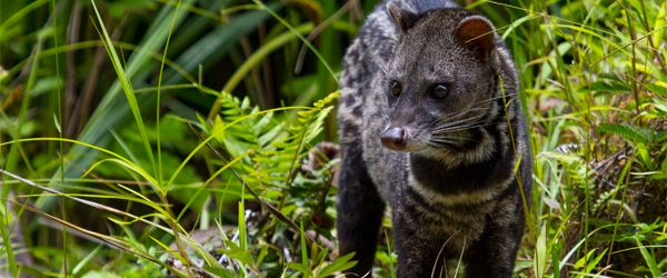 Best Places to See Wildlife in Asia: Danum Valley Conservation Area, Sabah, Malaysia