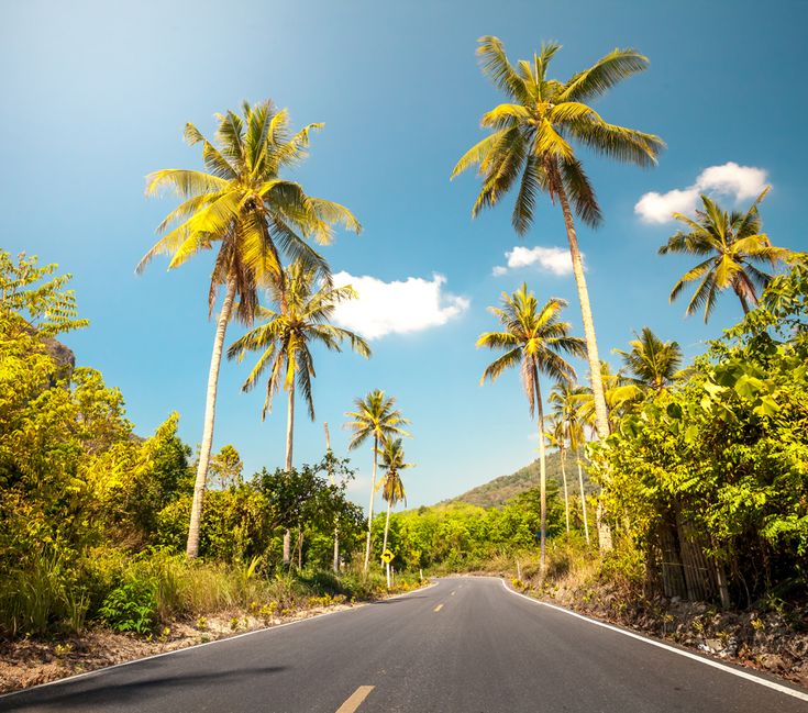 palm trees beach the open road stock photo