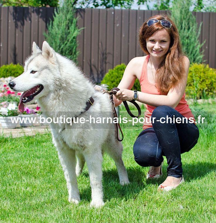 Superbe #harnais de qualité pour le chien #husky, en cuir feutré, conçu pour les promenades, sport canin et d'autres activités quotidiennes. On peut équiper ce harnais d'une poignée d'intervention afin d'avoir plus de contrôle sur l'animal ->54,35 €    @fordogtrainersf Pensez à mentionner «J'aime» si ce produit vous plaît.