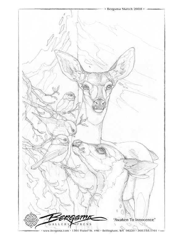 animal drawing sheets to color from Jody Bergsma - beautiful coloring pages - birds, deer, killer whale scene, flower fairies and a color wheel. #freecoloringpages #coloringforadults #animalstocolor  winter deer - Awaken To Innocence http://www.bergsma.tv/drawing-sheets/