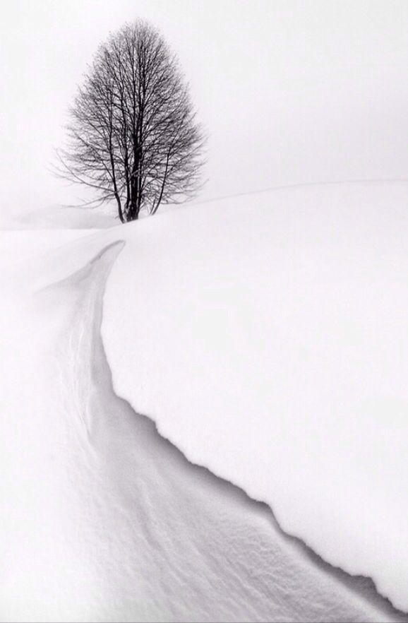 #landscape #blackandwhite #snow