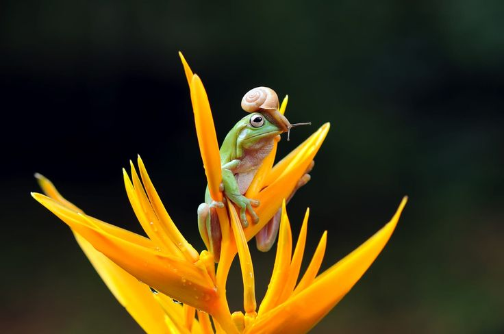 Frog with Snail, Frog by Andri Priyadi on 500px Ο Κέρμιτ έχει πρόβλημα :)