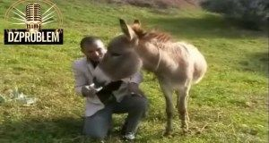 Lewhama 2014 HD Blagues Kabyle