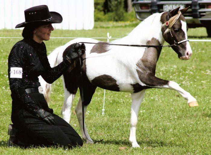 Image result for Florida Horses Webring