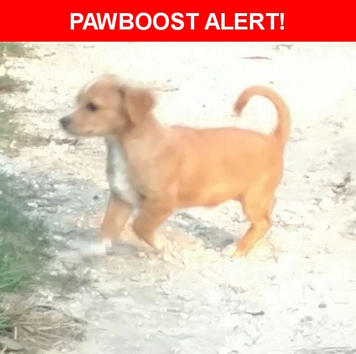 Please spread the word! Max was last seen in Navasota, TX 77868.  Description: 4.5 months. No chip, no collar.  Nearest Address: 4928 Happiness Lane, Navasota, TX, United States