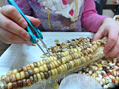Tweezers and indian corn for fine motor development! My kids loved this in the science center.