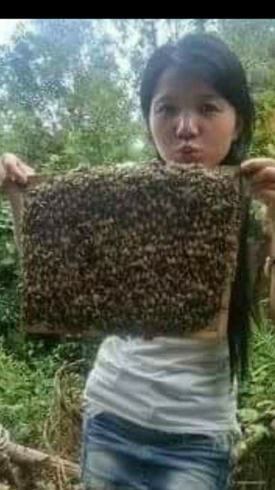 Panal lleno de abejas