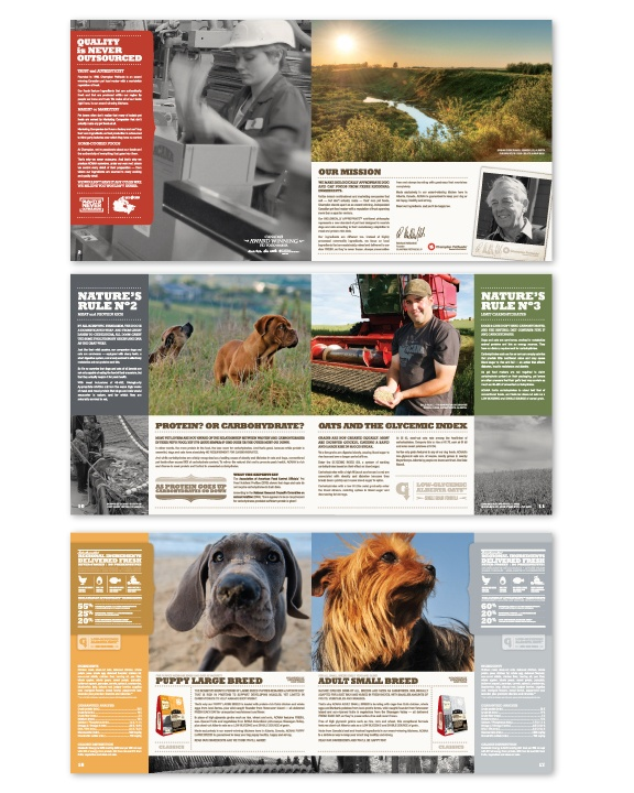 good brochure templates - 17 best images about pet brochures on pinterest brochure