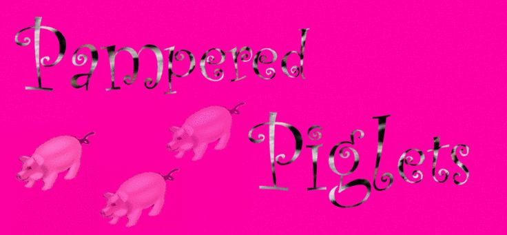 Teacup Piglets| Teacup pigs | Micro pigs|Tea Cup Pigs|Mini Pigs