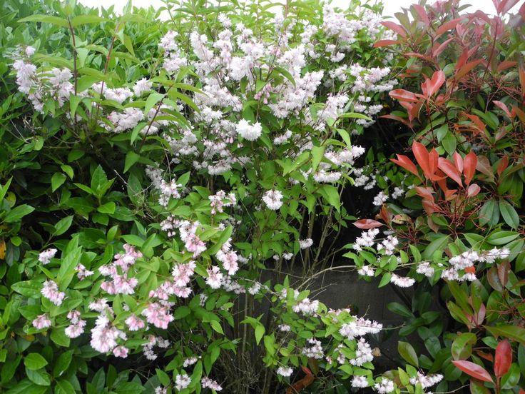 les 146 meilleures images du tableau plantes sur pinterest plantes am nagement de jardin et. Black Bedroom Furniture Sets. Home Design Ideas