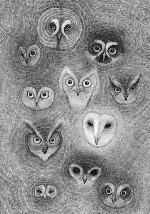 barn owl face drawing - Google Search