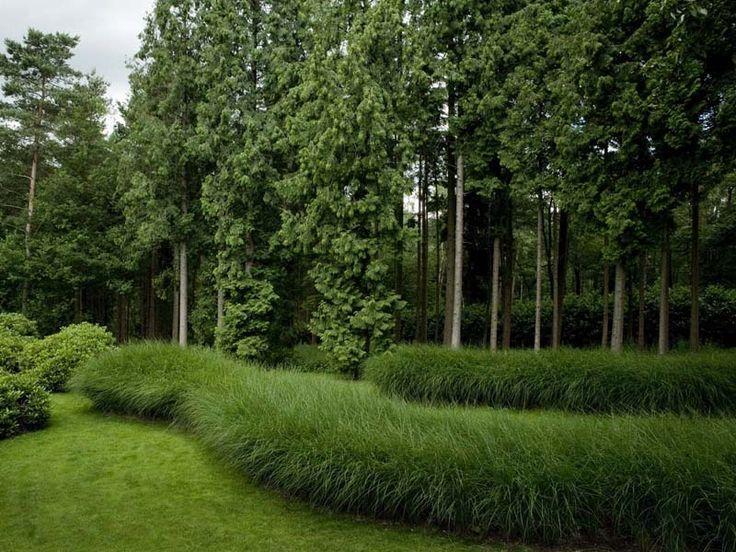 194 best grasses images on pinterest ornamental grasses for Natural grasses for landscaping