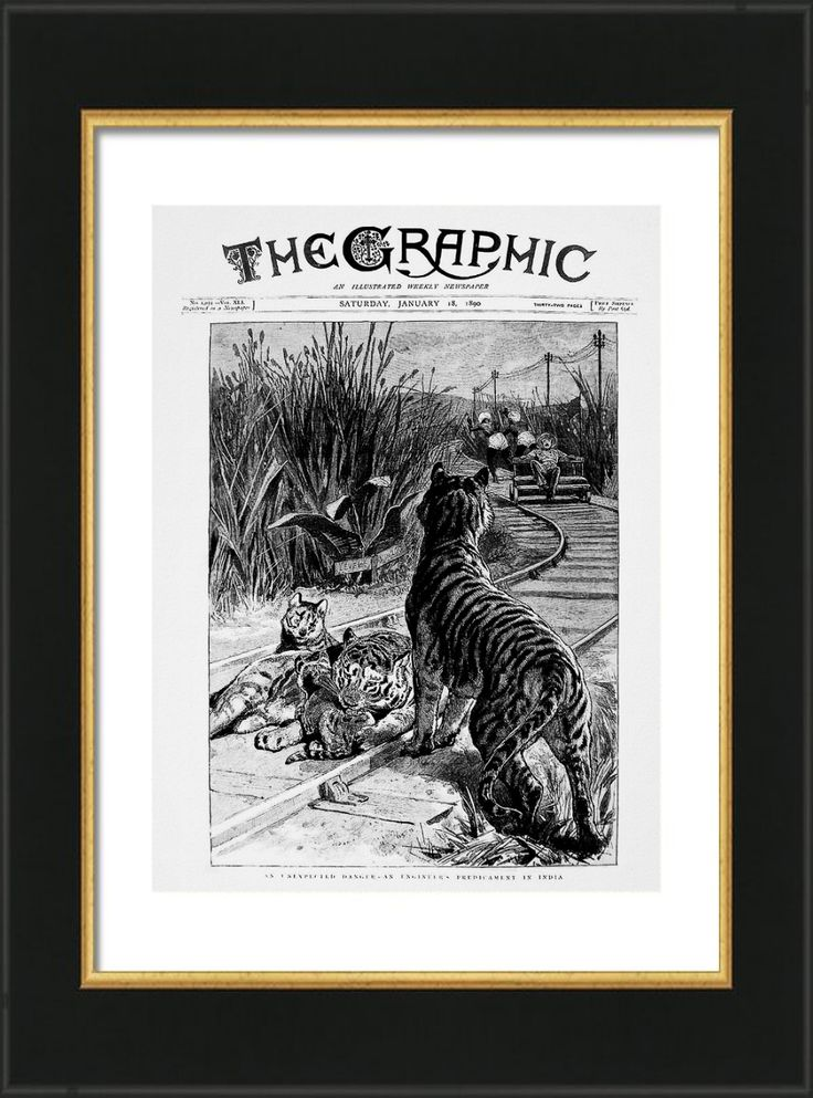 'An Unexpected Danger' - Vintage Print.  The perils of being an engineer in Colonial India! Vintage 1890 Newspaper Cover reproduced on Archival Heavyweight Paper. https://www.zazzle.com/an_unexpected_danger_vintage_print-228475733505427558 #India #tiger #prints #vintage #historic #railways