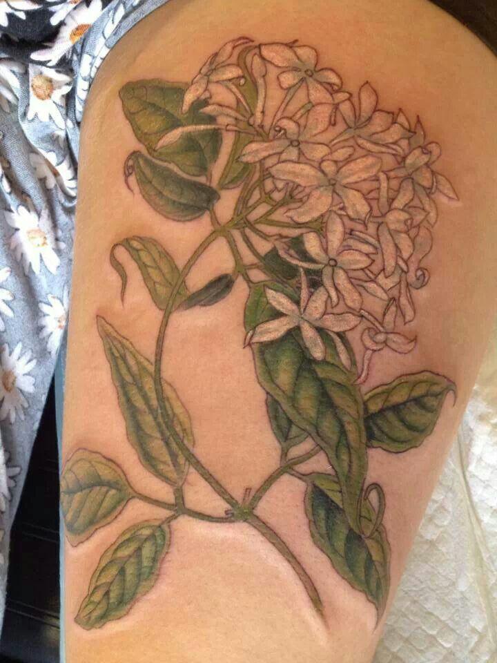 Jasmine Flower Tattoo Designs: Jasmine Tattoo