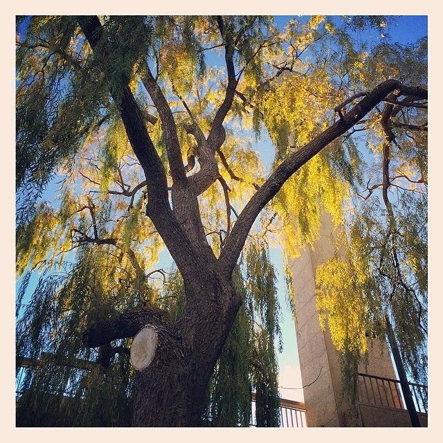 """""""#canberra really is beautiful in #autumn"""""""