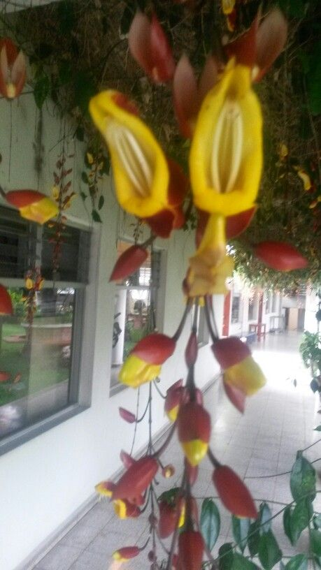 Flores colgantes