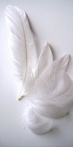 white                                                                                                                                                      Más