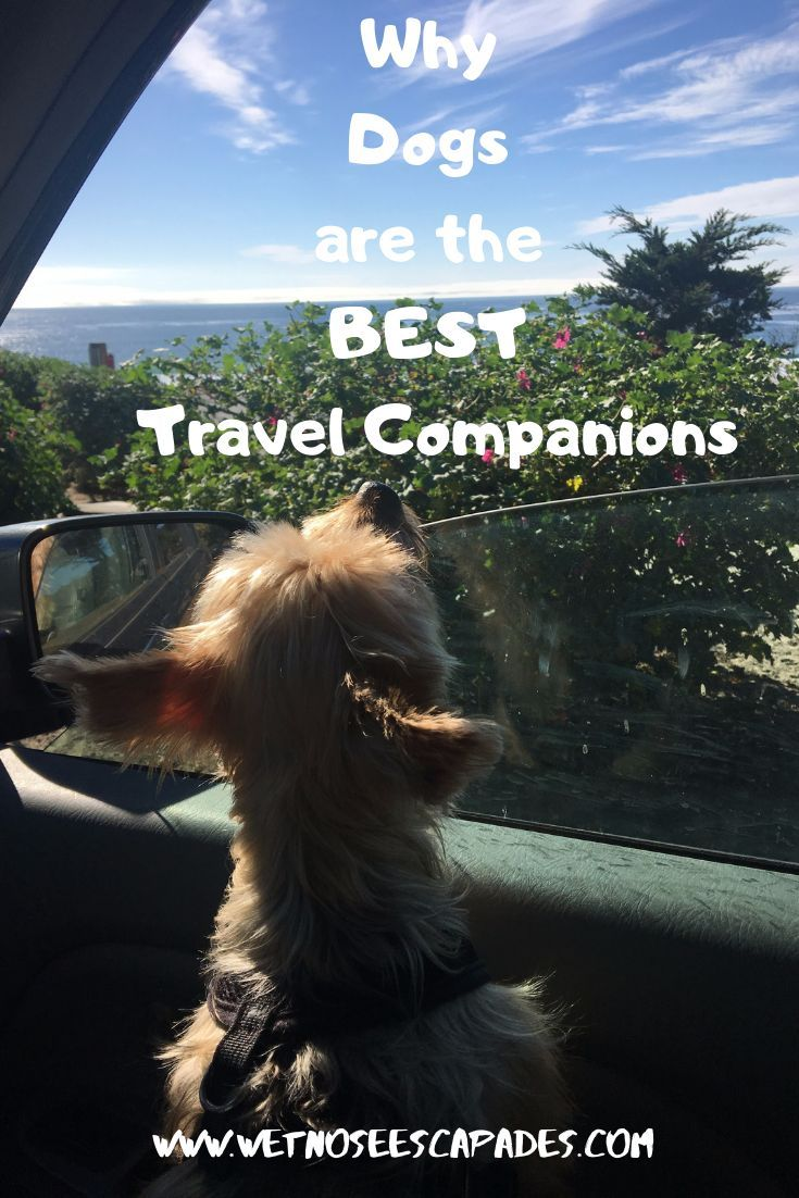 Why Dogs Are Awesome Travel Buddies Travel Travel Tips Travel Inspiration