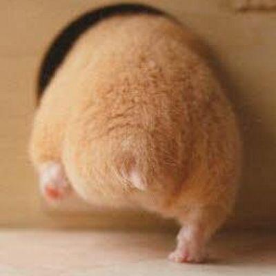 Hamster booty lol
