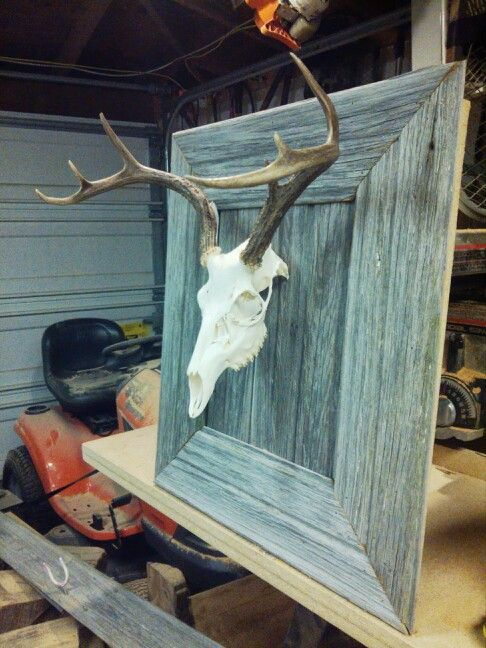 European mount, Texas Whitetail Deer, 100 year old barn wood