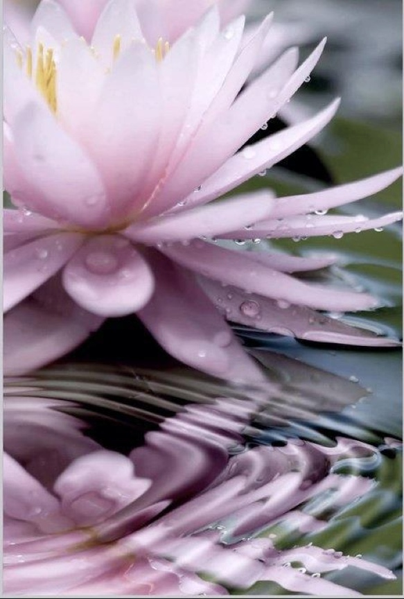 Drops and ripples