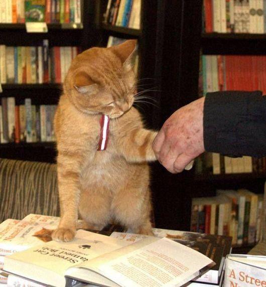 Eine halbtote Katze und ein drogenkranker Obdachloser finden sich. Was daraus entsteht ist ein modernes Märchen!