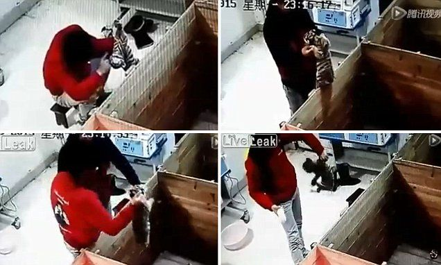 Chinese zookeeper filmed slapping one- month-old tiger cub in the head
