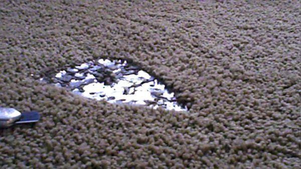 Phoenix Carpet Repair Iron burn before repair.