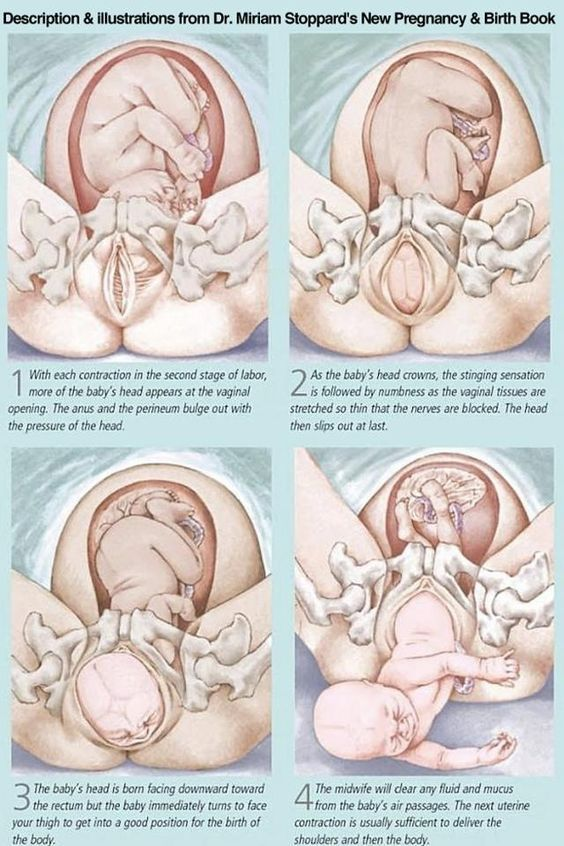 Cardinal Movements of Birth  Got to educated on whats happening to your body.