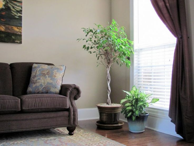 Living Room Gray Loveseat With Blue Pattern Carpet Also Painting And Flower Pot Besides Green Plant Glass Window Curtain Wooden Floor How To P