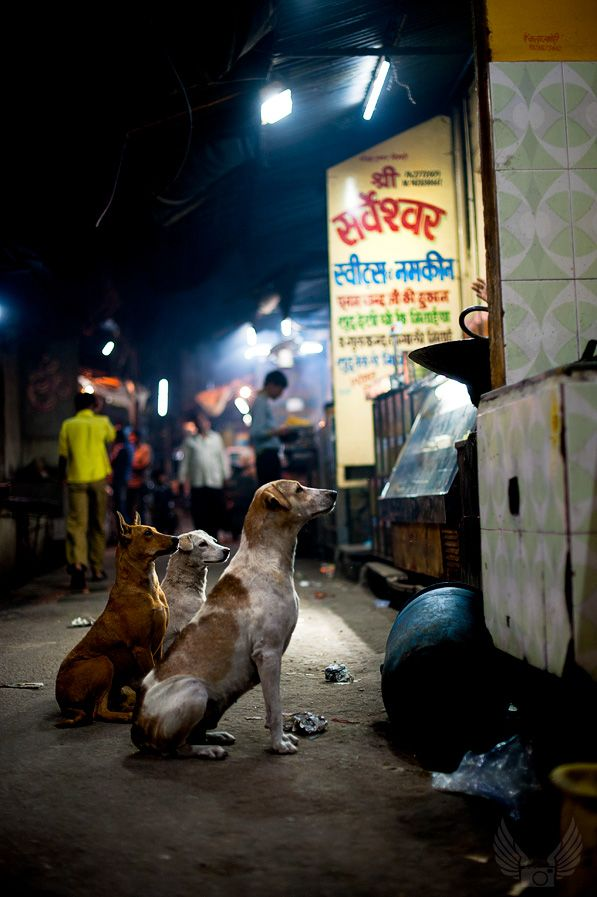 Dogs waiting for food in Pushkar, India. Get the free travel photography e-book!