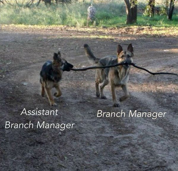 Branch Manager and Assistant Branch Manager! Funny Animal Pictures With Captions
