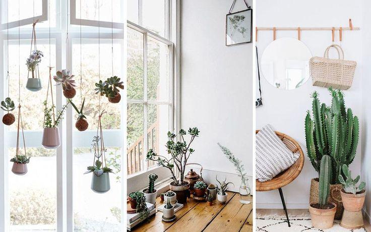 die 25 besten ideen zu kakteen und sukkulenten auf. Black Bedroom Furniture Sets. Home Design Ideas