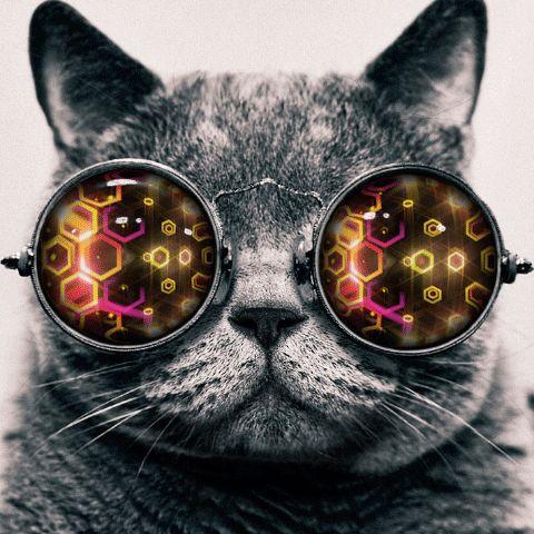 Trippy Cat, gif'd