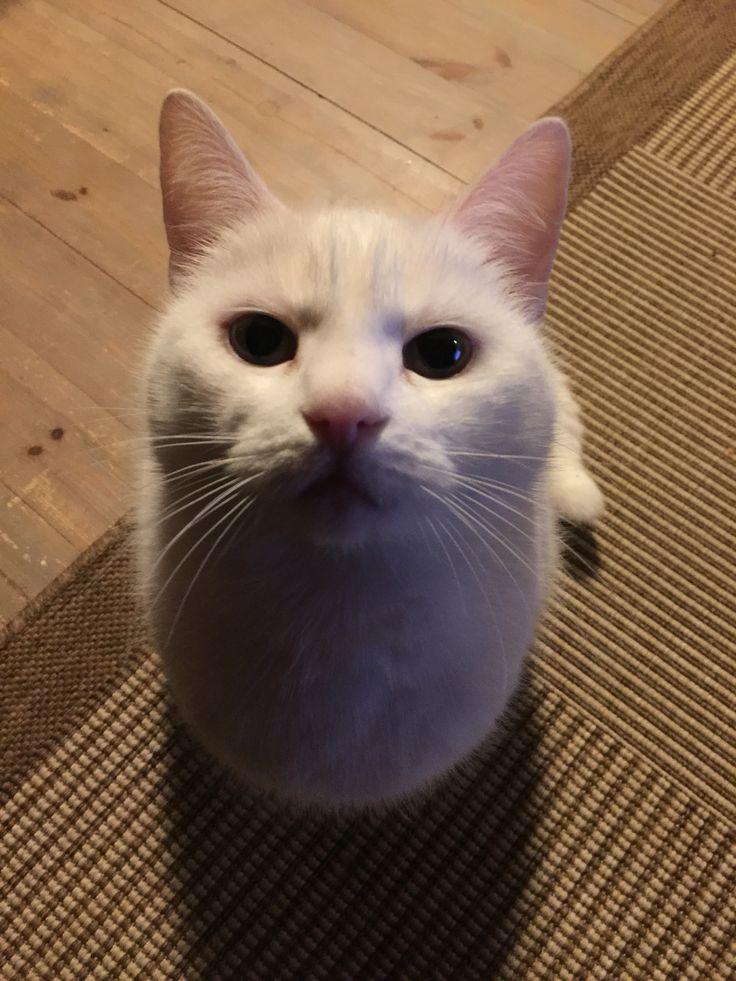 Kissa miiru