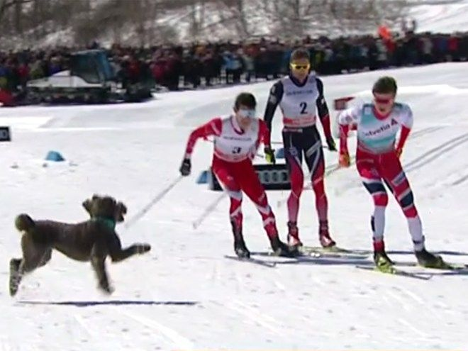 WATCH: Excited Dog Interrupts Ski Race, Takes Lead, Drops Out http://peoplem.ag/elN5vMs #dogs