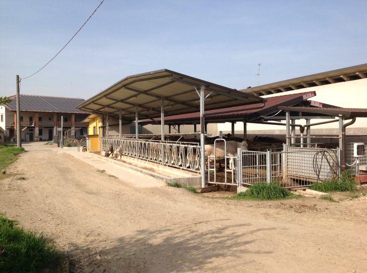 Cascina Colomberone, Azienda Agricola Madonna della Neve