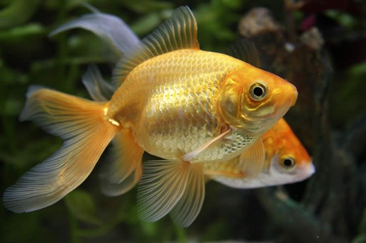 54 best science images on pinterest 10 codes historia for Easy to care for fish