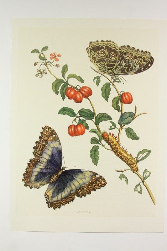 Butterfly Caterpillar Cherry Insect And Fruit