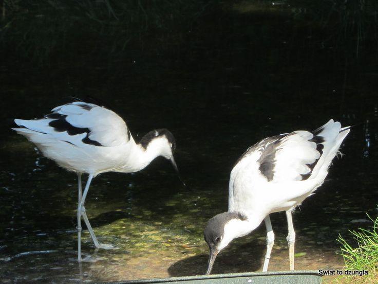 Küstenvögel